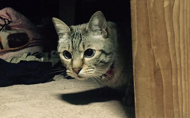 ひょっこりネコ