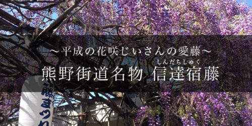 信達宿の藤アイキャッチ