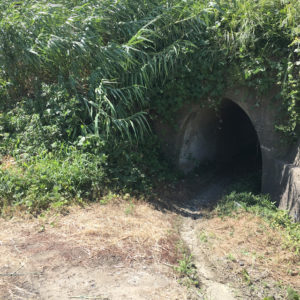 畑へのトンネル