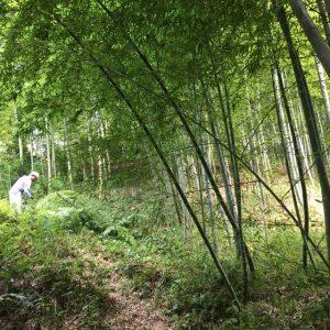 竹林に将来の翁